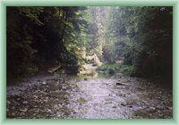 Stream Biely potok