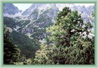 Mengusovská Valley